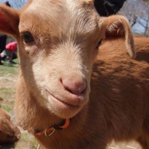 1歳児が牧場の動物がかじった野菜を口に入れた!その時どうすればいい?