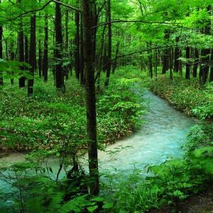 木曽の檜の効果で、リラックスと空気清浄・消臭や体へのメリットも得られるので、すぐに体感してみましょう