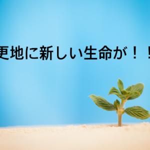 更地に新しい生命が!!