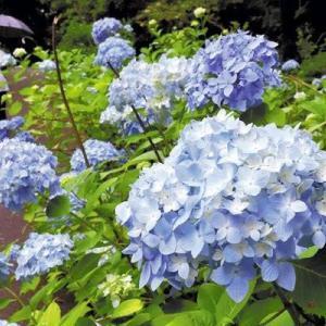 梅雨のジメジメした季節には体型カバーばっちりのブルーのチュニック