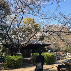 桜の綺麗なこの時期の子供なりの過ごし方