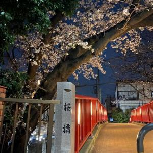 夜桜を見ながら思うこと