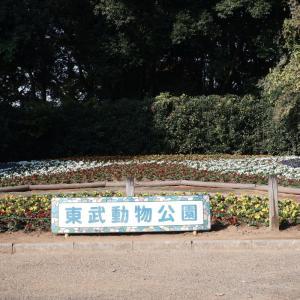 東武動物公園で紅葉を楽しむ