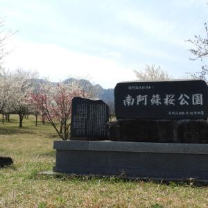 南阿蘇桜公園のソメイヨシノ