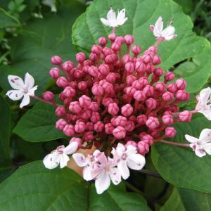 この花の名前は何~んだ?