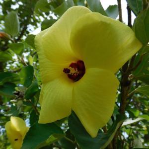 夏の黄色い花は天草市の市花