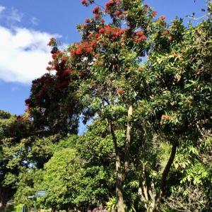 シドニー王立植物園は憩いの場に最高
