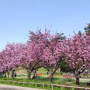5月4日の弘前公園