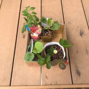 自宅の庭をカスタムDIYシリーズ🔨~ころたんコロコロ植えちゃった🍈