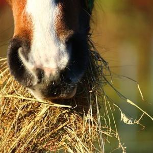 「高齢馬はどんな飼料(エサ)をあげたら良いでしょうか?」という質問をいただきました!