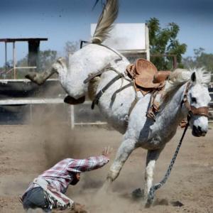 馬とふれあう時のありがちなケガとその回避方法とは? ~馬を触るなら必読~