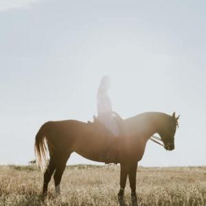 乗馬の正しい基本騎乗姿勢とは!? ~失敗しがちな原因・解決法も~