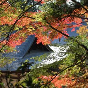 高雄 神護寺の紅葉