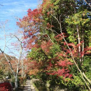 哲学の道の紅葉と猫たち