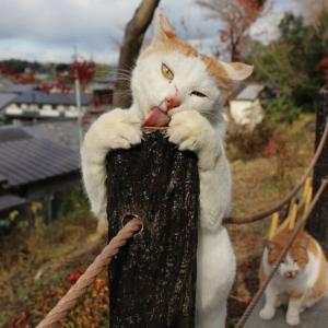哲学の道の猫と食事会