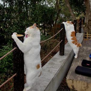 今朝の哲学の道の猫