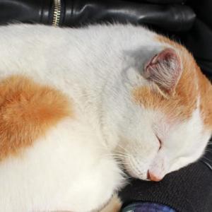 やすらぎ 猫たちが安心して過ごすとき、猫も人もやすらぎを感じる