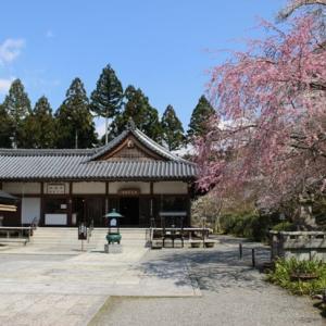 三千院の桜