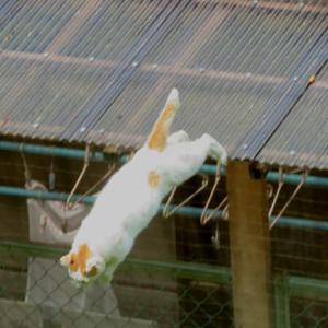 屋根からジャンプ!