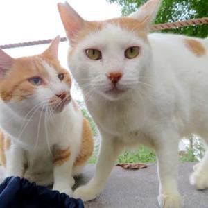 哲学の道の猫たち