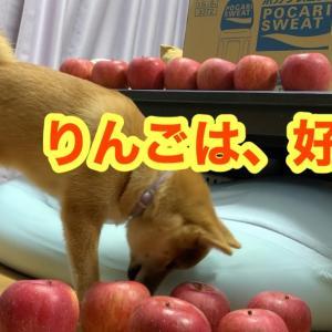 リンゴは好き?