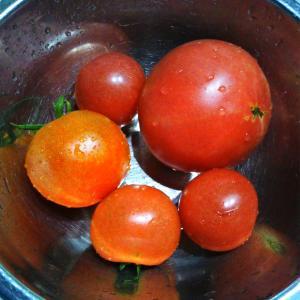 もらったトマトでミートソース