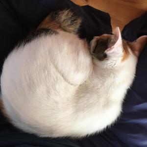 だんだん猫が丸くなる季節が近付いてきたのかな?