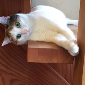階段でごろ寝