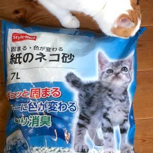 最近の我が家の猫トイレ事情