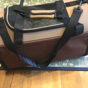 キャリーバッグを大きいものに買い替えました