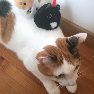 猫とねこだんご