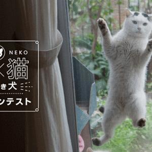 庭×猫・犬のフォトコンテスト開催