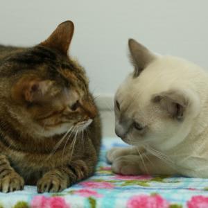 愛猫の健康を支える歯磨き