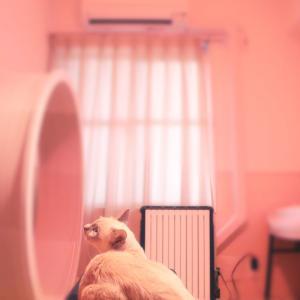 【暖房器具】エアコンとデロンギの賢い使い方