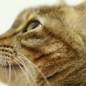 【ネコと暮らす】動物病院で役立つ健康日記