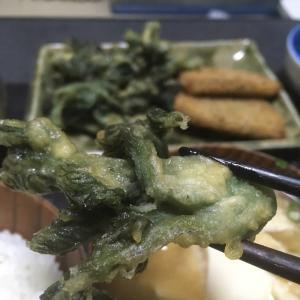 おっさんの独り晩飯 タラの芽の天ぷらと黒はんぺんフライ