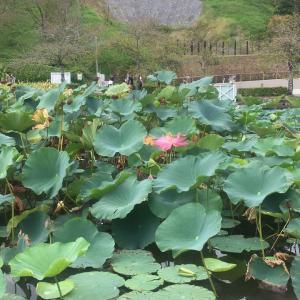 藤枝蓮華寺池公園と郷土博物館