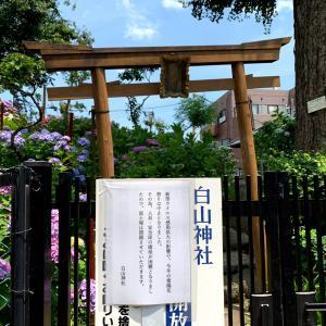 紫陽花やお花が大好きなあなたに♡  白山神社⛩