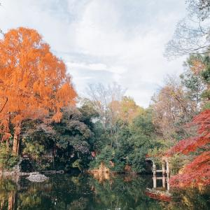 武蔵一宮 氷川神社⛩