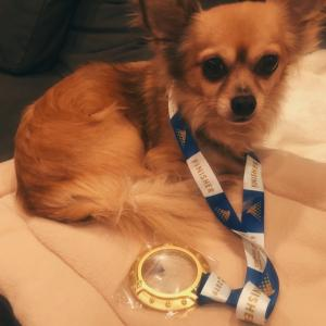 夫が横浜マラソン2019に参加!完走しなくてもメダルは貰える【横浜】