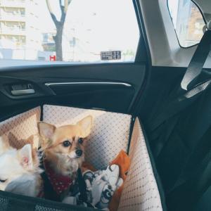 【ドライブボックス】愛犬2匹もOK。簡単装着で目を離しても安心