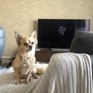 愛犬専用のフロアコーティングだとタイル張替えより安い【愛犬の床】
