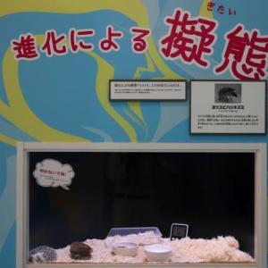 水族館「化ケモノ展」を開催 ! !(広島)