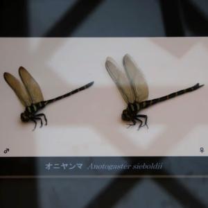 秋の企画展示「水辺の昆虫」 2(広島)