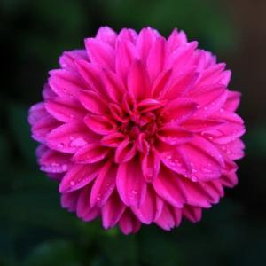今朝の花 60(広島)