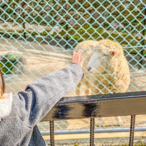 入園料無料の動物園に娘と2人で🐰