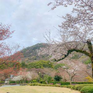秋もいいけど春の聚遠亭の庭園も好き(*´꒳`*)