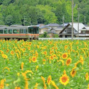 姫新線と向日葵🌻時々ミツバチ🐝