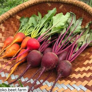 スーパーフードと言われるビーツ農場の野菜