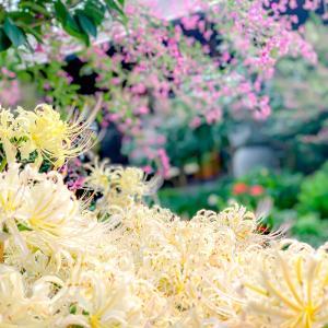 色とりどりの花が咲いている花の寺「円照寺」